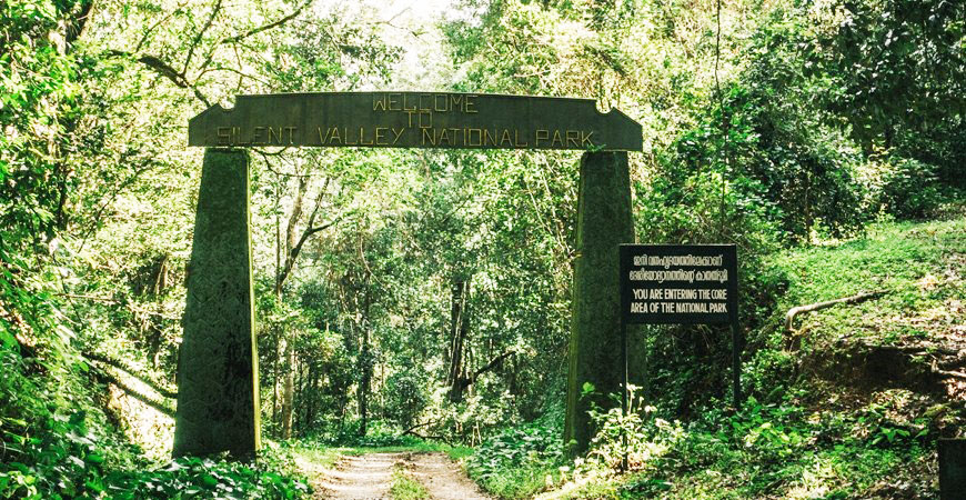 Silent Valley: One of the Last Untouched Rainforests in India