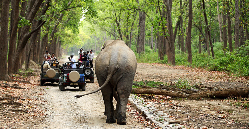 Dhikala Safari: A Rendezvous with your Wild Side