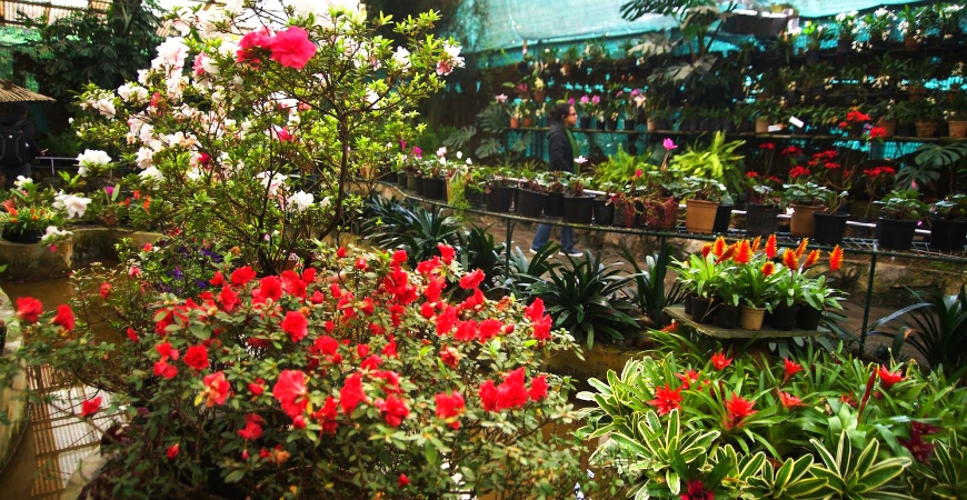 Flower Exhibition Centre: The best of Sikkim's Flora