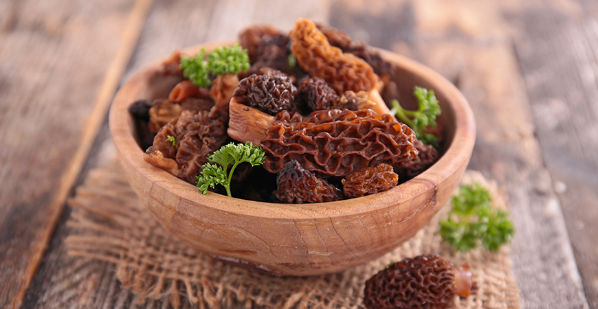 Gucchi Delicacy: The magic of Morel Mushrooms