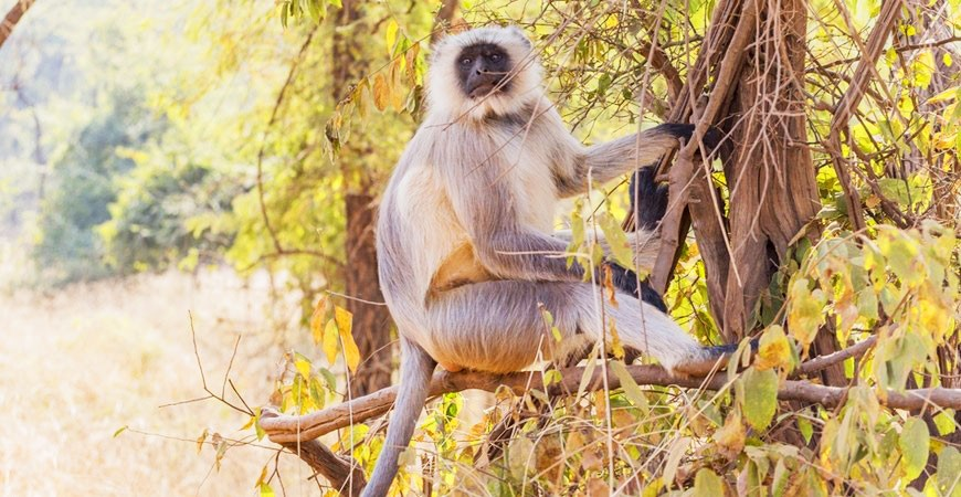 Sariska Forest: Unheard Stories of Wilderness